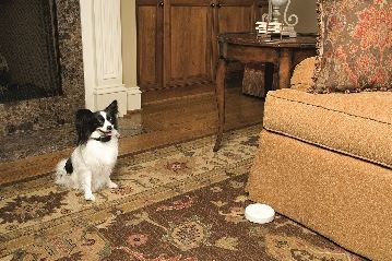 Indoor Dog Fence | Stop Your Dog from Getting Onto Furniture