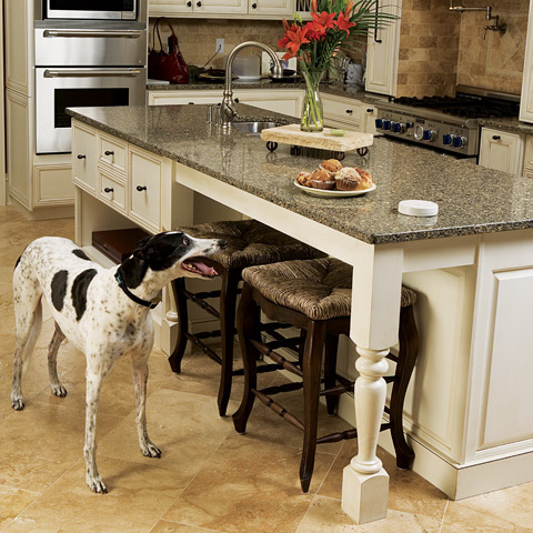 Indoor Dog Fence | Stop Your Dog from Counter Surfing
