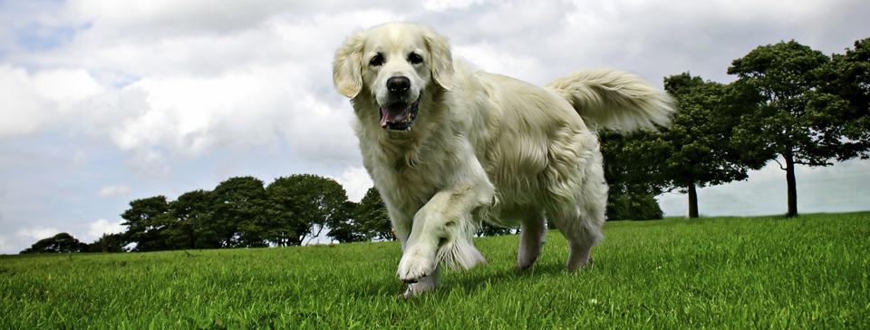 Dog Training For Dog Fences